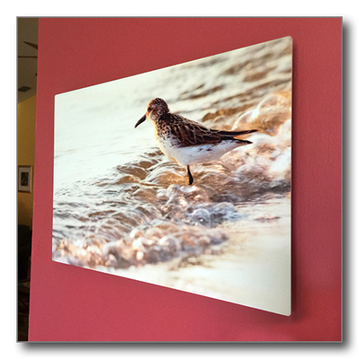 Metal Print with Float Mount