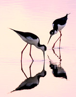 312-Stilts at Sunrise