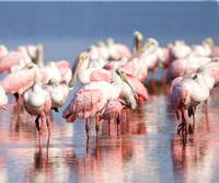 Spoonbill Photos & Images Gallery